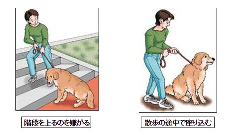 飼主が気づく行動の変化